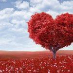 להביא שינויים על ידי אהבה - פרשת תולדות
