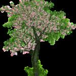 בניית אילן יוחסין (עץ שורשים משפחתי) בחינם