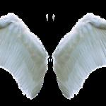 האם התורה מיועדת לבני אדם או למלאכים?