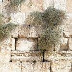 הלכות תשעה באב וחורבן בית המקדש